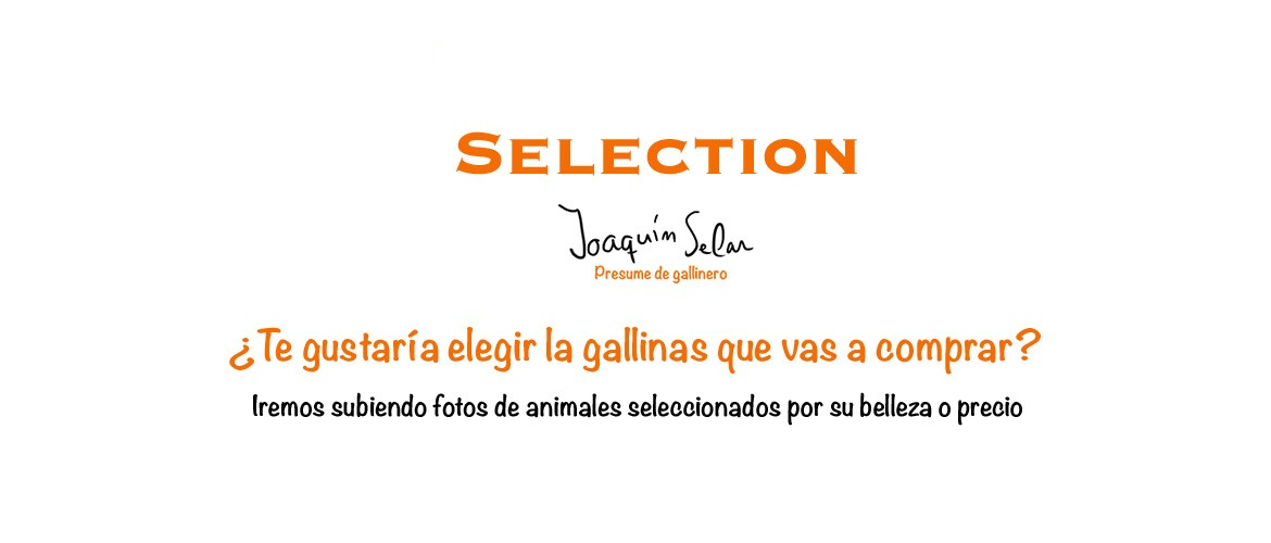 Gallinas Selection